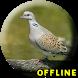 Suara Burung Perkutut Juara MP3 by NeoutronApps