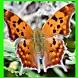 الفراشة الجميلة اللغز! لعبة by PTOWNGAMES