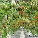 Vegetables Garden Ideas by Muntasir