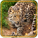 Jungles Predators by Live Wallpaper Exellent
