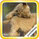 Jigsaw Puzzles: Big Cats by PuzzleBoss Inc