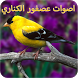 اصوات عصفور الكناري by mbarka khadiri