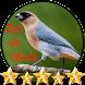Canto Bico de Veludo by jonn jeff