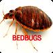 Bedbugs Disease
