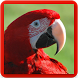 Macaw Parrot Bird Sound : Scarlet Macaw Sounds by Nic and Chloe Studio