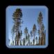 eSkogsplan Plan App by eSkogsplan