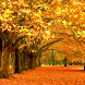 Yellow Autumn Free Wallpaper by Wiktor Robinson