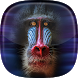 Monkey Live Wallpaper by HAPPY, INC.