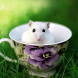 Funny Mouse Jigsaw Puzzles by vitudoom