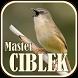 Suara Burung Ciblek Master by JTZstudio