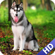 Husky Pack 2 Wallpaper by LwpApps