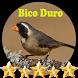 Canto de Bico Duro by jonn jeff