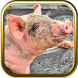 Pig Puzzle Games by PUZZLEQUESTIONS.COM