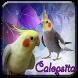 Calopsita - cantos e dicas by Rejeki 7 Turunan