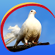 Peaceful Doves Live Wallpapers by Creativ Live Wallpapers
