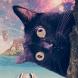 Silly Cat Wallpaper