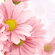 Pink Flower Theme C Launcher by Best theme store
