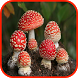 Mushroom Wallpaper by picture polly