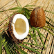 Coconut Meat For Health