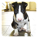 Bull Terrier Live Wallpaper by Dynamic Live Wallpapers