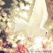 White dove live wallpaper by Creative apps and wallpapers