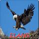 Suara burung Elang by pinarakapp