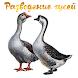 Разведение гусей by fishermanyou
