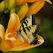 Tile Puzzle : Butterflies
