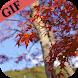 Latest Autumn GIF (HD)