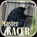 Suara Burung Kacer Master by JTZstudio