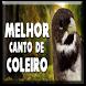 Melhor Canto De Canleiro tui tui by Rejeki 7 Turunan