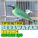 Tips & Trik Perawatan Burung Cucak Ijo