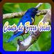 Canto de Ferro Velho by ayuki apps