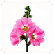 Hollyhock Flowers Connect Game by AndroidMatchesGames