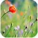Nature live wallpapers by Live Wallpapers Ltd.