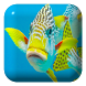 Fish Water Touch Lwp by Lwp4All
