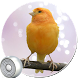 Best Bird Sounds & Ringtones by marki-dev-apps