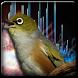 Suara Terapi Burung Stres by Bagoez Studio
