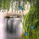 Waterfall Creeper LWP by Daksh Apps