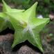 Star Fruit For Health