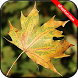 Wallpapers Autumn HD (backgrounds & themes) by Ahepton