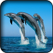 Dolphins wallpapers by HAnna