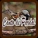 Canto de Pardal by ayuki apps