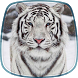 White Tiger Live Wallpaper by Cute Live Wallpapers And Backgrounds