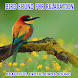 Bird Sounds For Relaxation