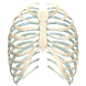Human Ribs 3D by Trendyworks LLC