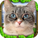 Stray Cat Simulator by Gluten Free Games