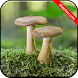 Mushroom Wallpapers by Ahepton.com