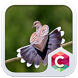 Cute Bird Theme C Launcher by Baj Launcher Team