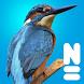 Vogels van Europa by Naturalis Biodiversity Center